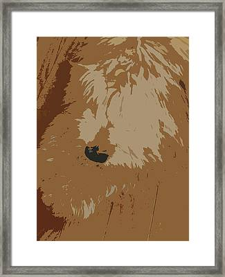 Find Max Framed Print by Vijay Sharon Govender