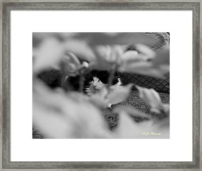Framed Print featuring the photograph Find The Kitty by Jeanette C Landstrom