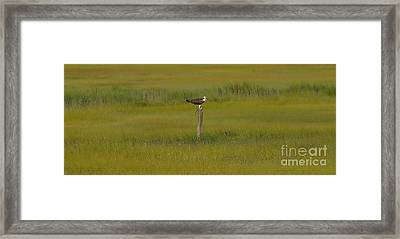 Find Your Center Framed Print by Michael Rucci