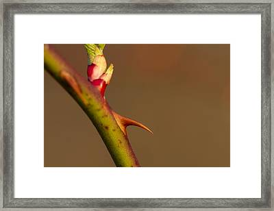 Finding Beauty In Our Pain Framed Print by Dean Bennett