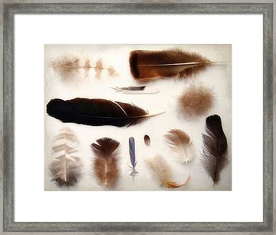 Finding Feathers Framed Print