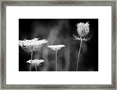 Framed Print featuring the photograph Fine Lace by Penny Hunt