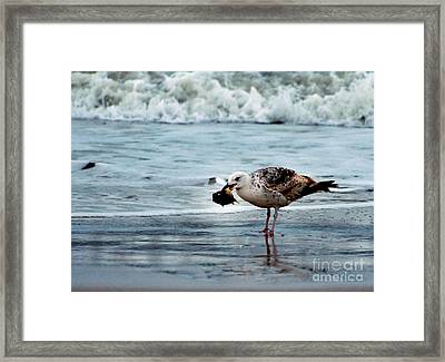 Fine Ocean Dining Framed Print by Paul Ward