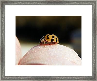 Framed Print featuring the photograph Finger Grazing by Chad and Stacey Hall