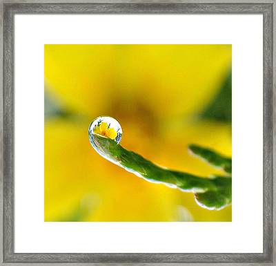Finger Tip Flower Framed Print