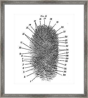 Fingerprint Diagram, 1940 Framed Print by Science Source