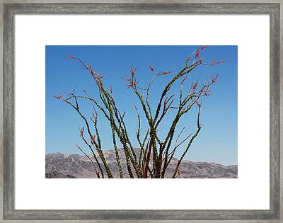Fingers To The Sky Framed Print