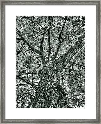 Finkles Landing Tree Framed Print