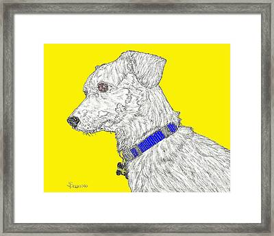 Finn In Color Framed Print by Salvadore Delvisco