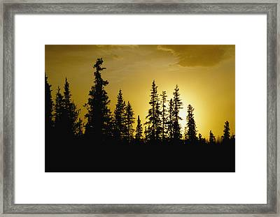 Fir Trees Silhouetted In Early Morning Framed Print by George F. Mobley