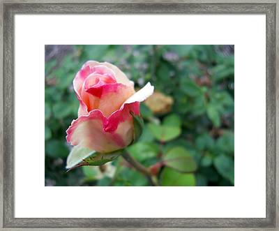 Framed Print featuring the photograph Fire And Ice by Lynnette Johns