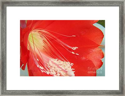 Fire Cactus Framed Print
