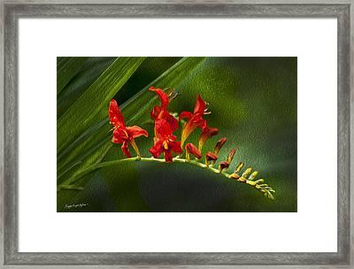 Fire In The Garden Framed Print