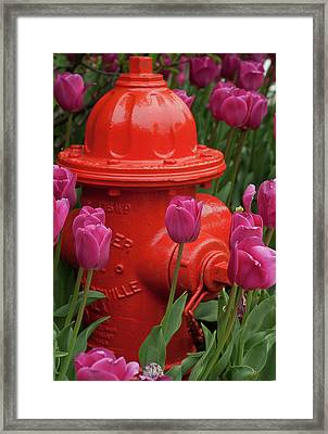 Fire Plug And Tulips Framed Print