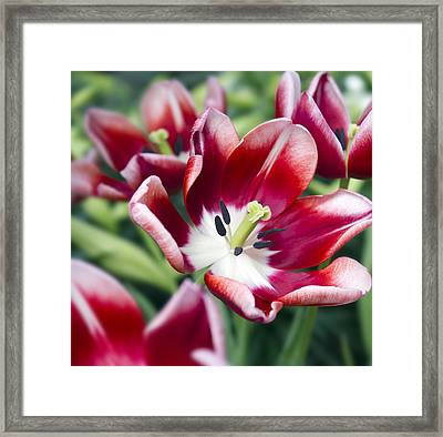 Fire Red Framed Print by Peter Chilelli