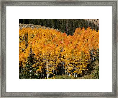 Fire Topped Quakies Framed Print