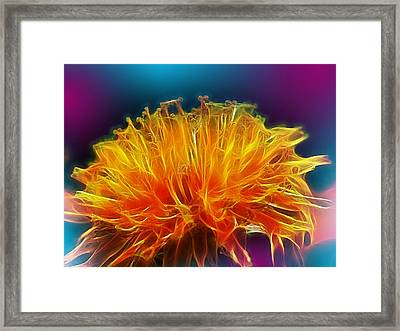 Fire Woven Dandelion Framed Print by Bill Tiepelman