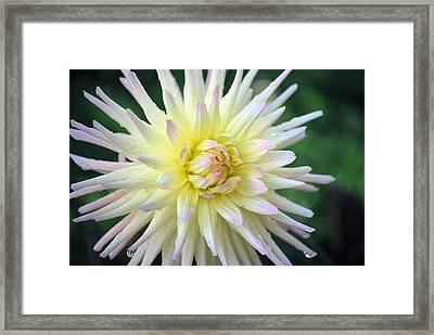 Framed Print featuring the photograph Firecracker Mum by Amee Cave