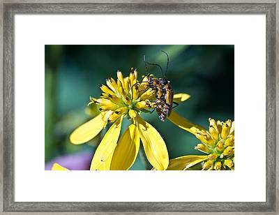 Firefly Fornication Framed Print