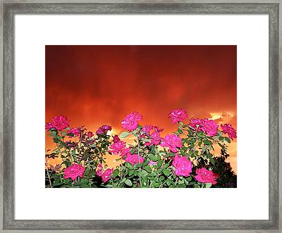 Framed Print featuring the photograph Firery Roses by Wendy McKennon