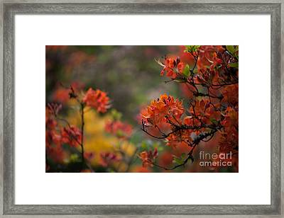 Firestorm Framed Print by Mike Reid