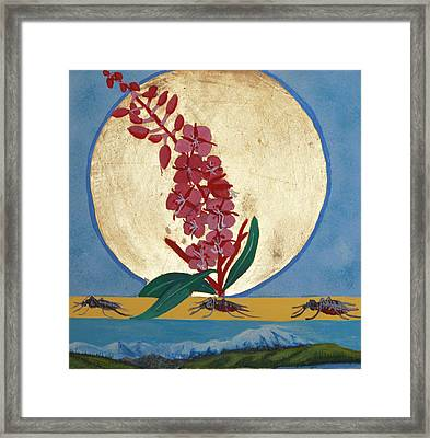 Fireweed In Summer Framed Print by Amy Reisland-Speer