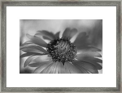 Framed Print featuring the photograph Firewheel In Mono by Vicki Pelham