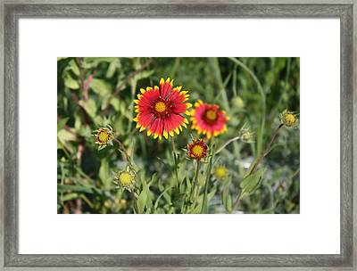 Framed Print featuring the photograph Firewheel by Lynnette Johns