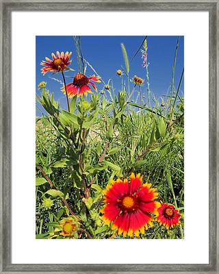 Framed Print featuring the photograph Firewheels Galour by Lynnette Johns