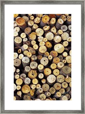 Firewood Framed Print by Carlos Caetano