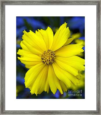 Firey Yellow Flower Framed Print