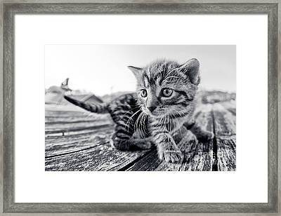 First Adventure Framed Print by Henrik Spranz