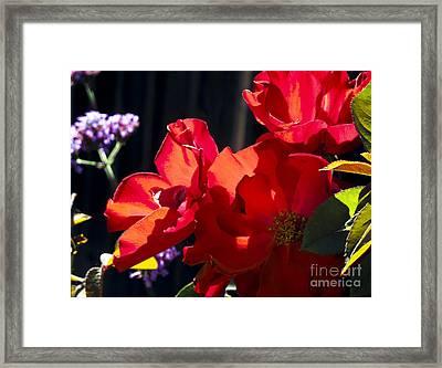 First Blooms Framed Print by Leslie Hunziker