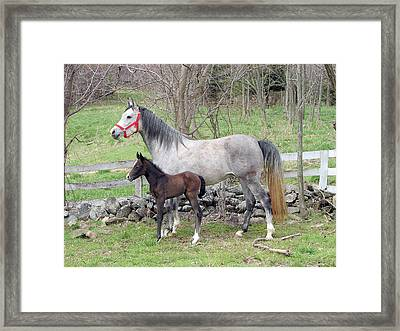 First Born Framed Print by Heather  Boyd