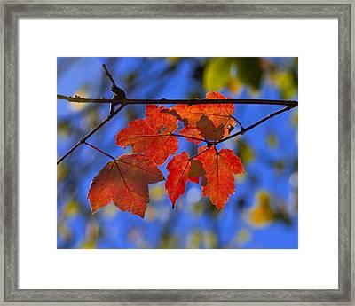 First Color Framed Print