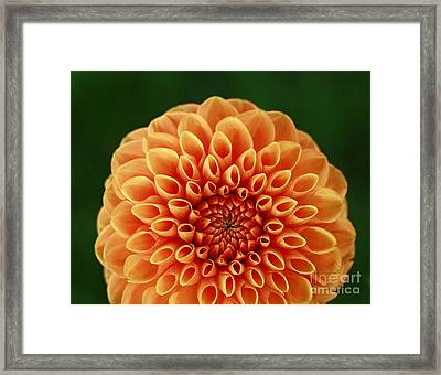 First Impression Framed Print by Inspired Nature Photography Fine Art Photography