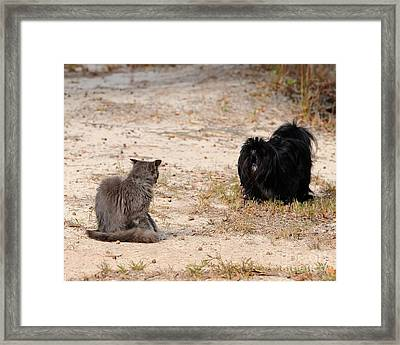 First Impressions Framed Print