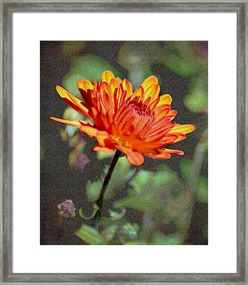 First Mum For Fall Framed Print by Sandi OReilly
