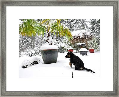 First Snow  2 Framed Print by Tanya  Searcy