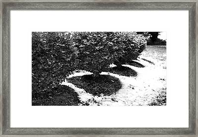 First Snow Boxwoods Framed Print