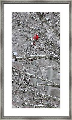 Framed Print featuring the photograph First Snow Fall by Kume Bryant