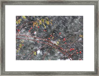 First Snow... Framed Print by Frederic Vigne