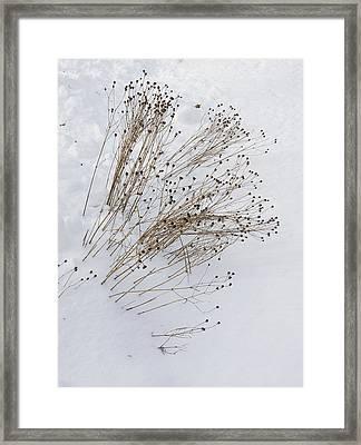 First Snow Framed Print by Michael Friedman