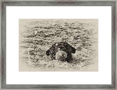 First Swim II Framed Print