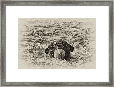 First Swim II Framed Print by Kelly Reber