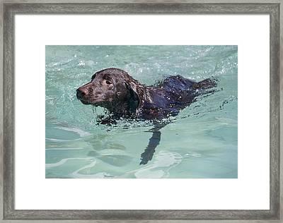 First Swim Framed Print