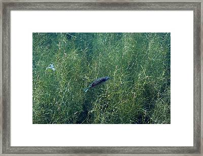 Fish And Fly Framed Print by Jenn Harris