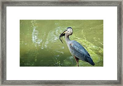 Fish Dinner Framed Print by Susi Stroud