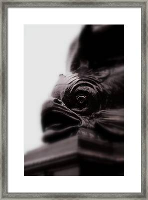 Fish Eye Framed Print by Jacqui Collett