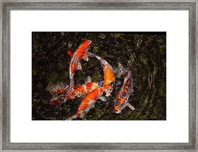 Fish Game Framed Print by Viktor Savchenko